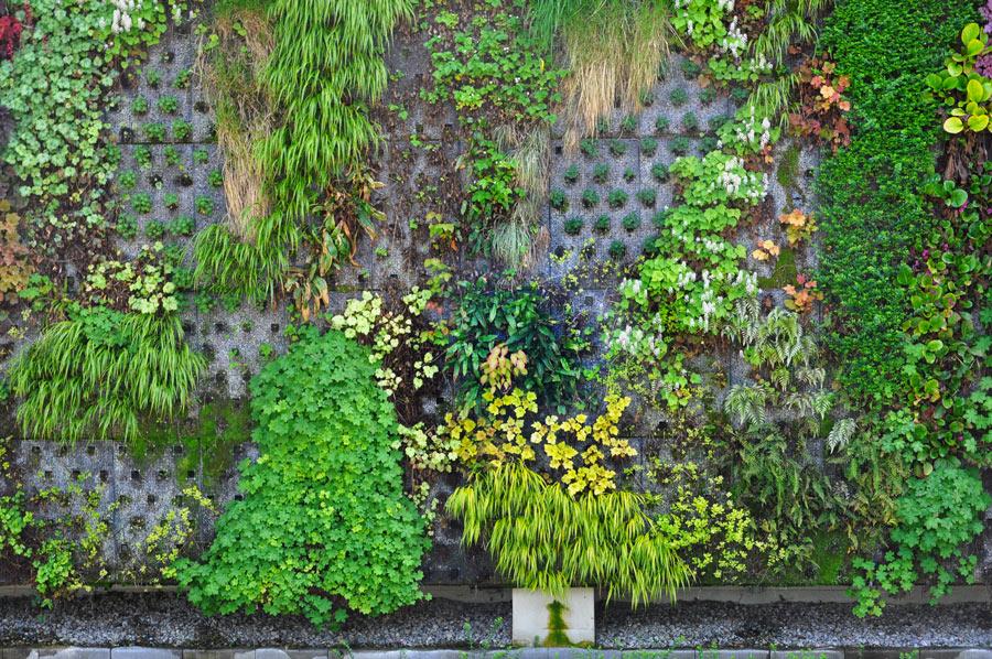 Parete esterna con giardino verticale