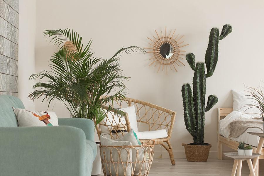 La pianta di cactus per decorare casa.