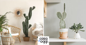 vari tipi di Cactus per abbellire casa