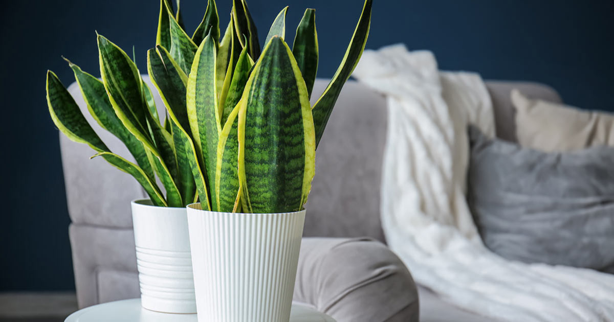 piante-assorbi-umidità