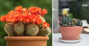 piante-grasse-da-esterno