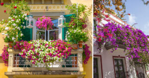 Decorare il balcone con piante rampicanti fiorite.