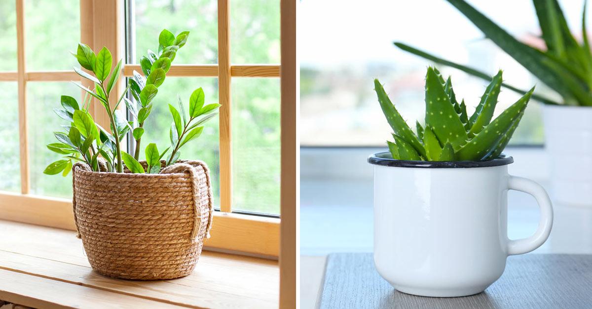 piante da interno poca acqua