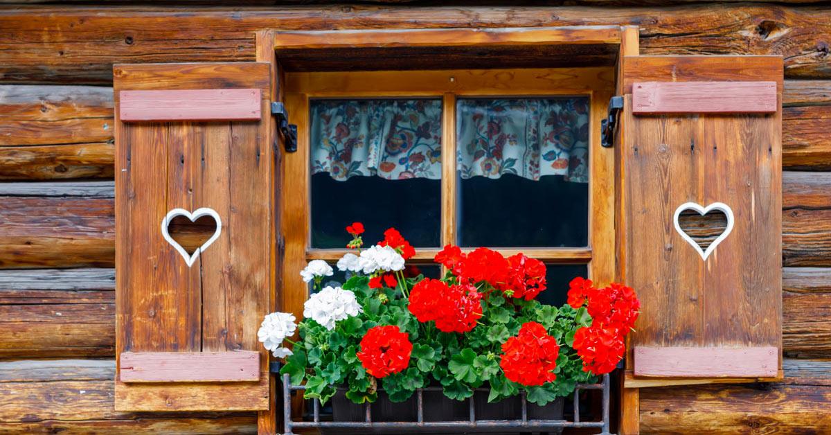 finestre fiori