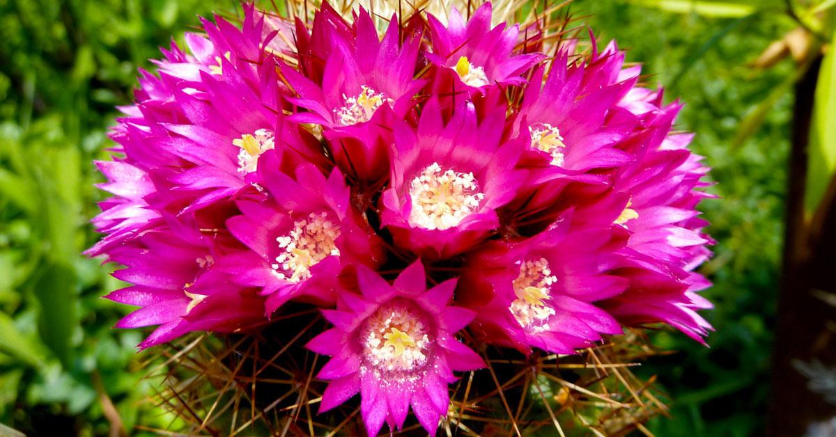 Piante grasse con fiori profumati.