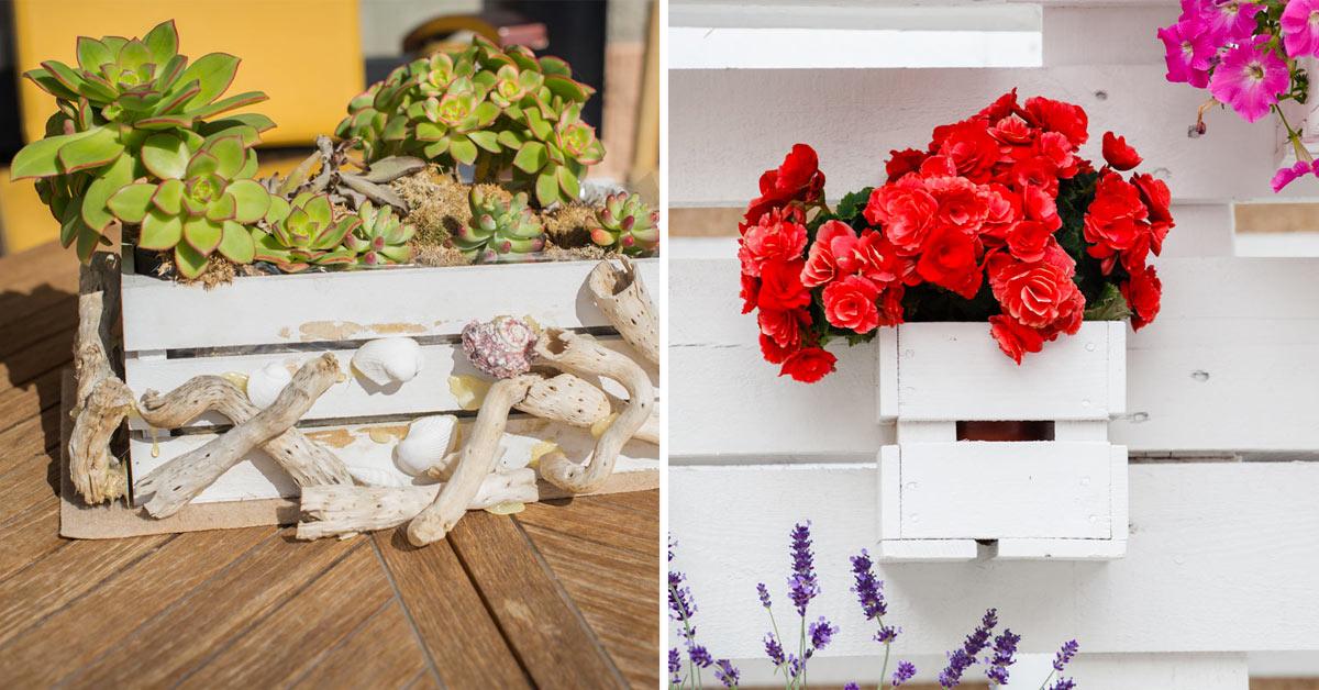 Cassette di legno con piante e fiori.