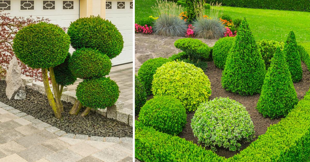 Tagliare siepe e cespugli in giardino.
