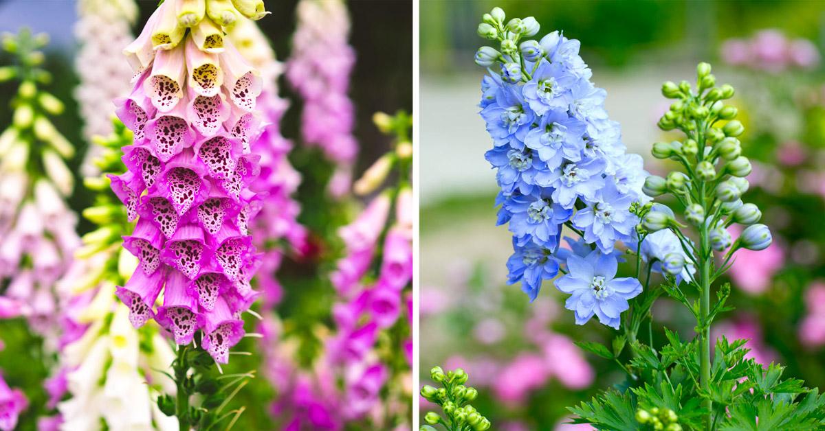 Piante con fiori perenni.
